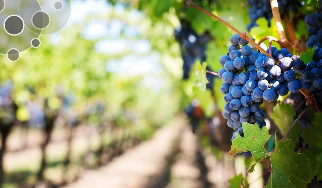 Analytic Lab au cœur des analyses en milieu viticole